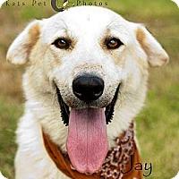 Adopt A Pet :: Jay - New Boston, NH