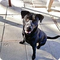 Adopt A Pet :: Puck - Silsbee, TX