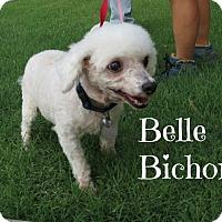 Adopt A Pet :: Belle Bichon - Scottsdale, AZ
