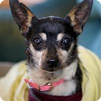 Adopt A Pet :: Gertrude - Worcester, MA