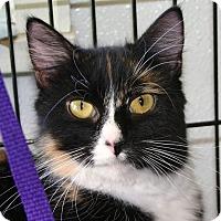 Adopt A Pet :: Genie - Port Jervis, NY