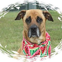 Adopt A Pet :: HANA - Upper Marlboro, MD