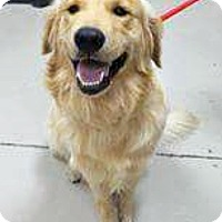 Adopt A Pet :: Cadbury - BIRMINGHAM, AL
