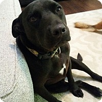 Adopt A Pet :: Bailey - Richmond, VA