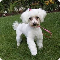 Adopt A Pet :: MARIELLE - Newport Beach, CA