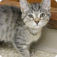 Adopt A Pet :: Joy - Medina, OH