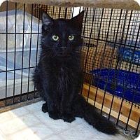 Adopt A Pet :: Lipton - Colmar, PA