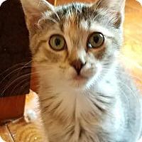 Adopt A Pet :: Josie - Colfax, IA
