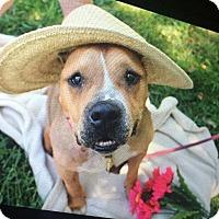 Adopt A Pet :: Bernadette - Louisville, KY