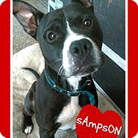 Adopt A Pet :: Sampson - Des Moines, IA