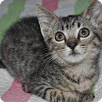 Adopt A Pet :: Roscoe - La Canada Flintridge, CA