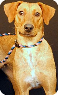 Feist/Hound (Unknown Type) Mix Dog for adoption in Newland, North Carolina - Lyric