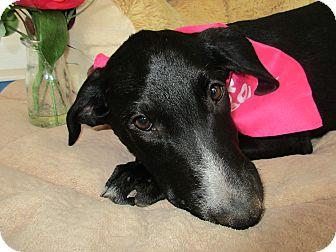 Labrador Retriever Mix Puppy for adoption in Baltimore, Maryland - Sable