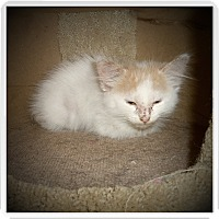 Adopt A Pet :: FLYNN - Medford, WI