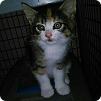 Adopt A Pet :: MYSTERI - Elk Grove, CA