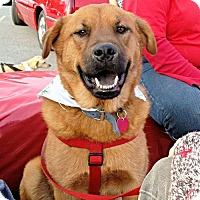 Adopt A Pet :: Zeus - Fredericksburg, VA