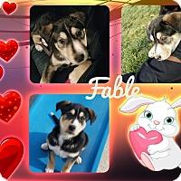 Adopt A Pet :: Fable - Las Vegas, NV