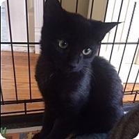 Adopt A Pet :: Manny - Long Beach, NY
