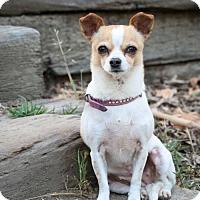 Adopt A Pet :: Skittles - Capistrano Beach, CA