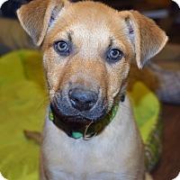 Adopt A Pet :: MAXWELL - Memphis, TN