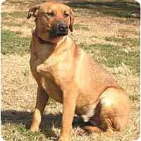 Adopt A Pet :: Earl - Centerton, AR