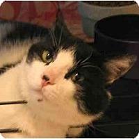 Adopt A Pet :: Hayward - Plainville, MA