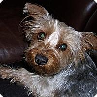 Adopt A Pet :: Aspen - Orange, CA
