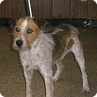 Adopt A Pet :: Jasper - McLoud, OK