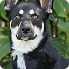 Adopt A Pet :: Sarah von Shula
