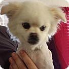 Adopt A Pet :: Nukky