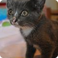 Adopt A Pet :: Anastasia - Port Republic, MD