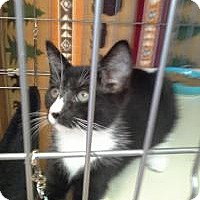 Adopt A Pet :: Brewster - Raritan, NJ