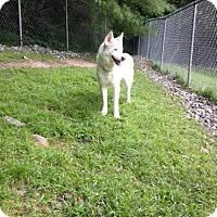 Adopt A Pet :: Thor - Cashiers, NC