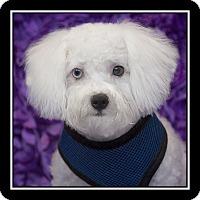 Adopt A Pet :: Jack Daniel - San Dimas, CA