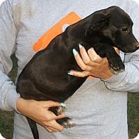 Adopt A Pet :: Ben - Stamford, CT