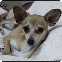 Adopt A Pet :: Bambi - Rockwall, TX