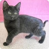 Adopt A Pet :: Mary Ann - Larned, KS