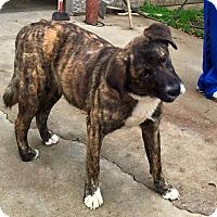 Adopt A Pet :: Samuel - New Oxford, PA
