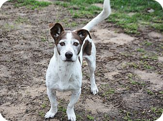 Basset Hound Mix Dog for adoption in Stapleton, Alabama - Cocoa