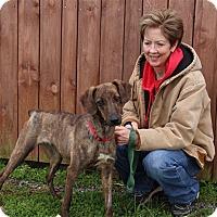 Adopt A Pet :: Marie - Elyria, OH