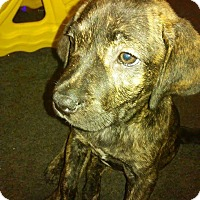Adopt A Pet :: Judy - Charlestown, RI