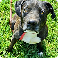 Adopt A Pet :: Mitch - Norfolk, VA