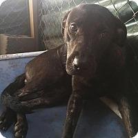 Adopt A Pet :: Ethel - Quinlan, TX