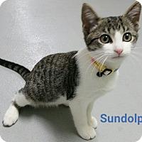 Adopt A Pet :: sundolphin - Muskegon, MI