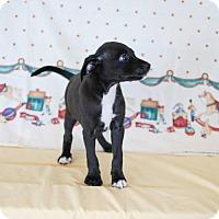 Adopt A Pet :: SAM TH - Tampa, FL