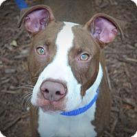 Adopt A Pet :: Cash - Wilmington, NC