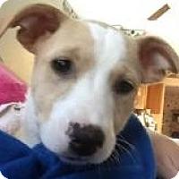Adopt A Pet :: Carrie - Joliet, IL