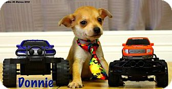 Chihuahua Mix Puppy for adoption in Shreveport, Louisiana - Donnie