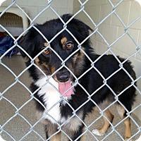 Adopt A Pet :: Dax - Encinitas, CA