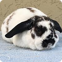 Adopt A Pet :: Angus - Bonita, CA